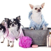 Pampering your pet is pampering yourself.