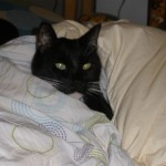 My Figaro, We miss you