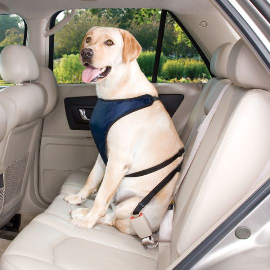 buckling up your pet