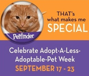 less adoptable pets