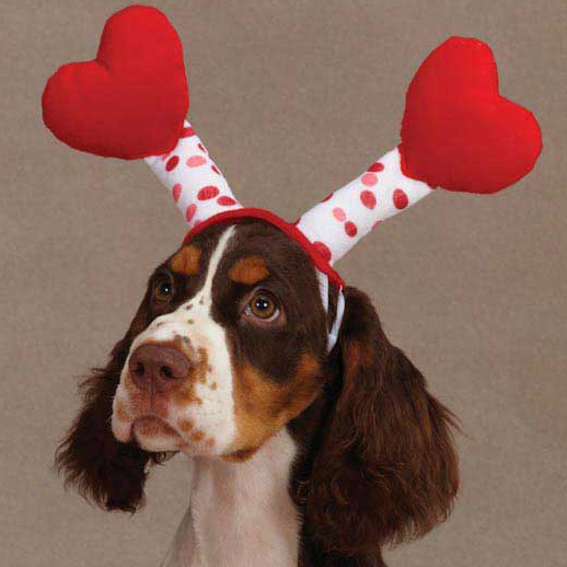 valentines day gifts for pets