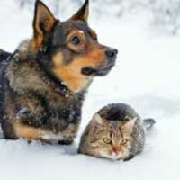 Caring for pets in winter