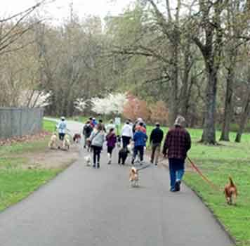 Group Walking Dogs