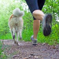 Burn Calories with Your Dog The Fun Way.