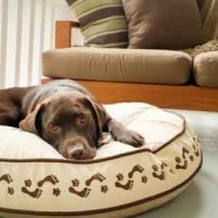 RoundLuxury Dog Bed