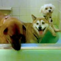 dog and friends bath together