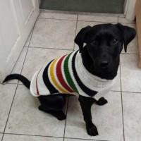 Winter dog sweater
