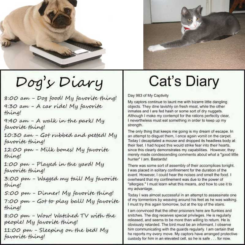 The defference between dogs and cats
