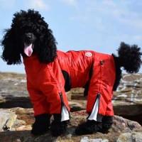 Classy-dog-overall-zippy2