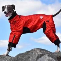 Classy-dog-ziggy-overall-1L