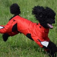 Classy-dog-ziggy-overall-2L
