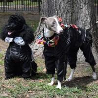 Flashy-Dog-Overall-10L