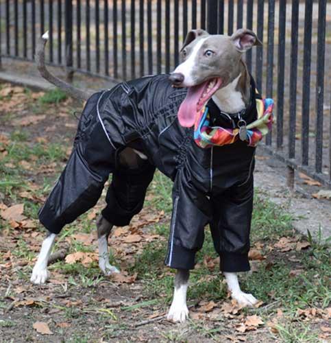 Flashy-Dog-Overall-2L
