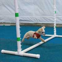 2 leg dog running over obstacles