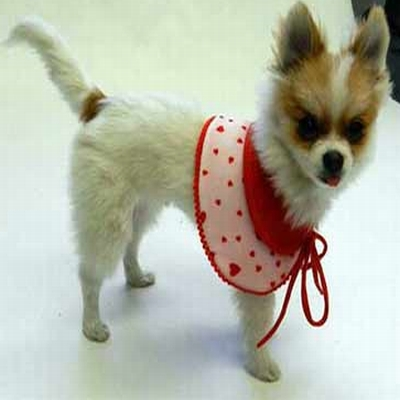 Puppy Designer Clothes | Designer Dog Clothes