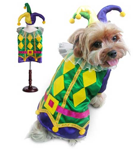 Halloween Harlequin Mardi Gras Dog Costume  sc 1 st  4-Legged Pet Boutique & Harlequin Mardi Gras Dog Costume